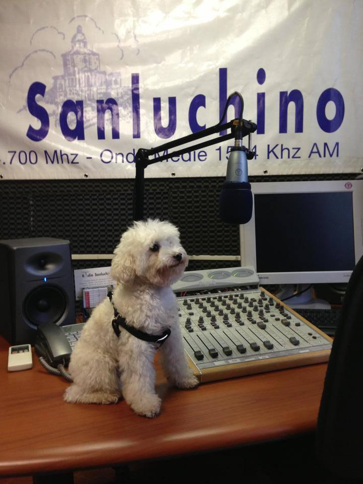 Cherie- Radio Sanluchino